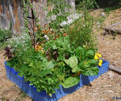 Photo Stage Terre Vivante : Aménager mon petit jardin